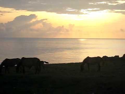 馬鼻崎の朝日。馬と一緒に。
