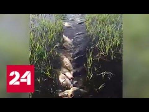 Двести сазанов в одних руках: на рыбака вылили тонны ненависти - Россия 24