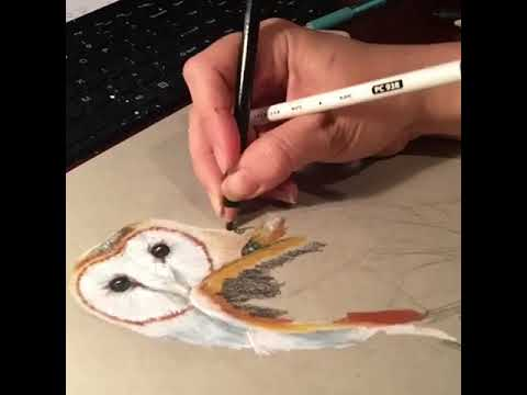 Timelapse Progress On A Colored Pencil Drawing Of Barn Owl