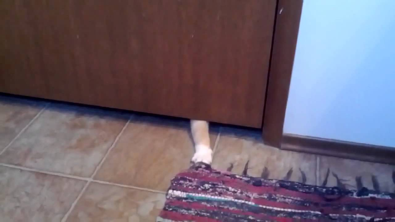 Cat Stealing Food Youtube