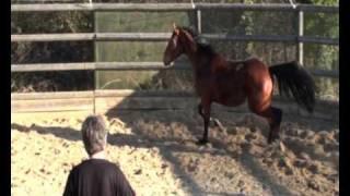 chevaux a vendre domaine de la tuilerie