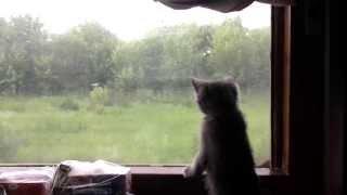 Котенок едет в поезде