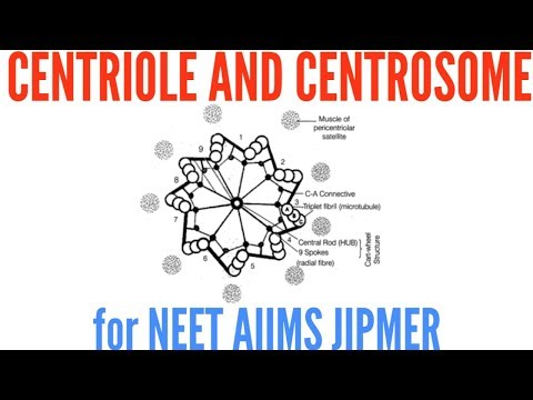 Structure Of Centriole And Centrosome