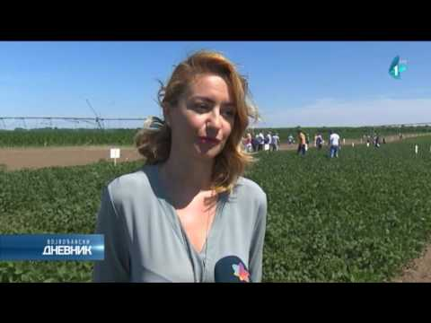 Za njive bez GMO soje