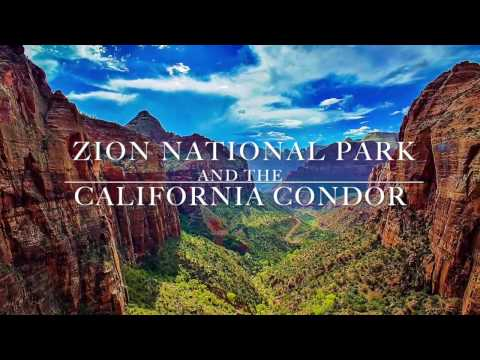 Zion National Park and the California Condor