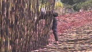 Documentário mostra o cotidiano e condições de trabalho de cortadores de cana-de-açucar