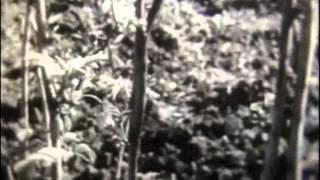 Вегетативное размножение культурных растений