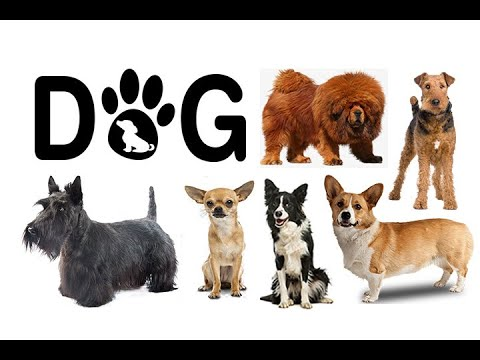 Dog Breeds. Siberian Husky,Scottish Terrier,German Shepherd,Golden Retriever,Dachshund,Chow Chow,...