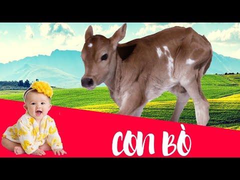 Dạy bé học tiếng việt qua động vật | em tập nói và nhận biết các con vật | dạy trẻ thông minh sớm 1