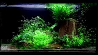 layout 60 125l by tropica