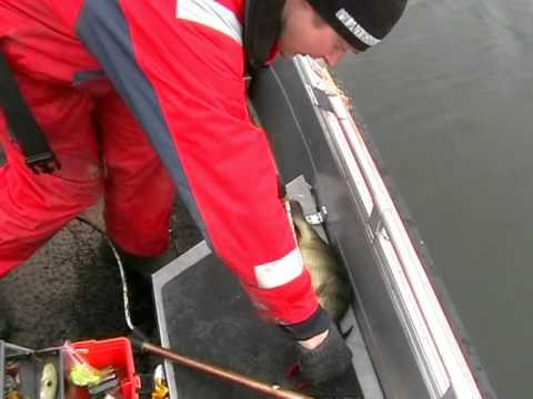 2100g abborre fångad på Åland  perch catched on Aland Islands