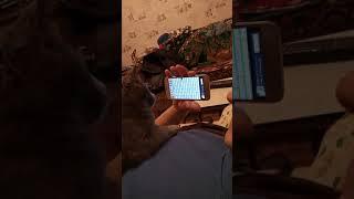 Кошка ловит мышей в телефоне!