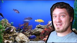 Перезапуск Аквариума и его Переезд | Рыбки это клево!