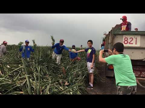 DOLE Pineapple Plantation at Polomolok, South Cotabato