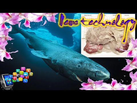 News Techcology -  Greenland sharks can develop parasites on their eyes
