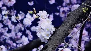 作曲 Compose Piano Hidenori FB https://www.facebook.com/hidenori.is...