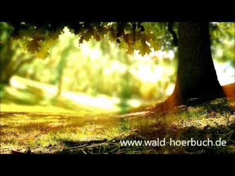 Wenn der Wald spricht 2 - Kapitel 01 - Wahrheit