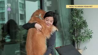 ZumVet - How to Weigh Your Pet