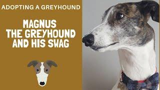 Adopting a Greyhound  Magnus and his stuff
