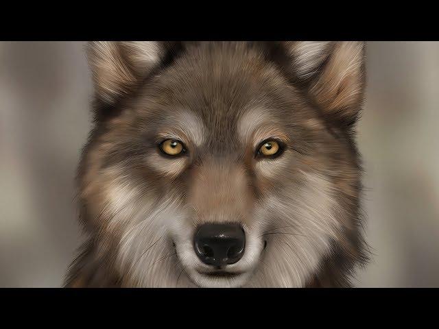 fur brush video, fur brush clip
