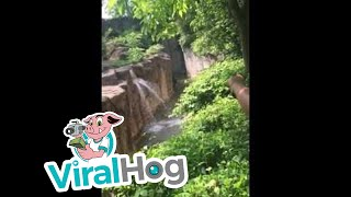 Cincinnati zoo kills gorilla to save boy who fell into enclosure [HD Original] by : ViralHog