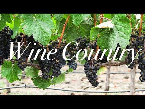 A Napa Sonoma Valley Vlog | The French Laundry & Peju Winery