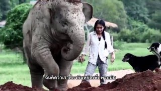 DIB Talk # 3 - แสงเดือน ชัยเลิศ ผู้ก่อตั้ง Elephant Nature Park