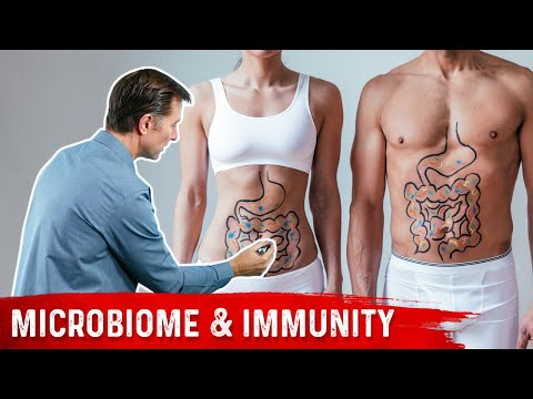 Your Immune System is Mostly Gut Bacteria