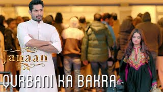 Qurbani Ka Bakra | Funny Scene | Janaan 2016