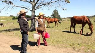 Preventing aggression at feeding time with horses
