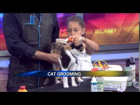 Jorge Bendersky On News 12 Long Island Animal Island For One Picture Saves A Life