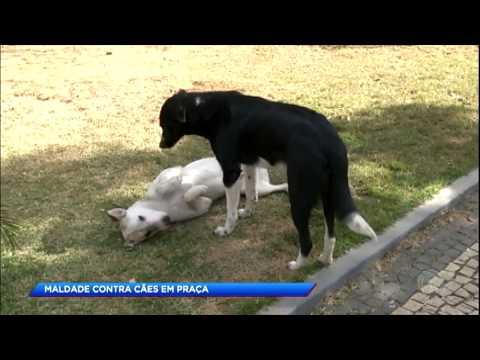 Quinze cães são envenenados no sul de Minas Gerais