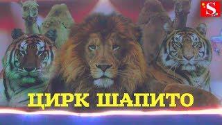 """ЦИРК-ШАПИТО """"АРЕНА ЯГУАР"""""""