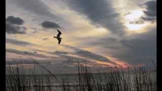 Cánh chim ngày gió lộng_HT