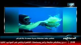 غطاس ينقذ سلحفاة بحرية مهددة بالانقراض
