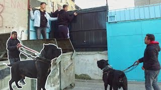 WE DIVE IN IZMIR ROMAN NEIGHBORHOOD WITH GIANT CANECORSO