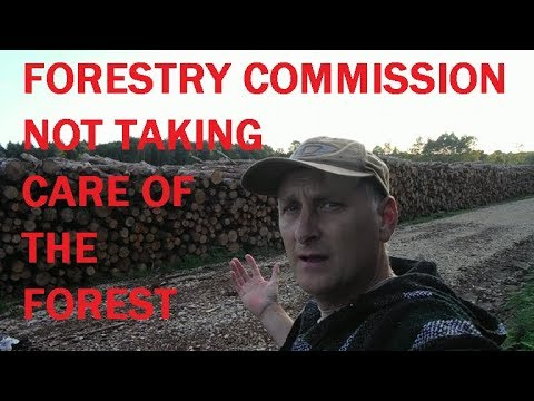 Mushrooms and GRRRRRR !  the Forestry commission.