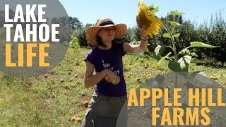 Day trip to APPLE HILL California from Tahoe—Finding the World's Best Pie [Tahoe Life Ep 6]