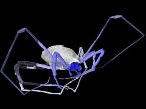 Ancient Arachnids WERE EVEN SCARIER!