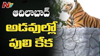 ఆదిలాబాద్ అడవుల్లో పులులకే రక్షణ లేదా?   NTV Special Focus On Adilabad Tigers Missing Mystery