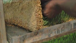 Kenya, L'hydroponique pour cultiver du fourrage pour bétail