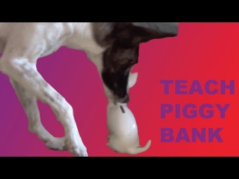Dog trick tutorial: Coin in a Piggy Bank