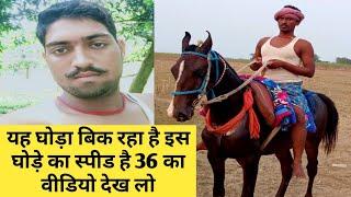 खगरिया जिला घोड़ा मालिक हगगू चौधरी सवार छोटू कुमार घोड़ा हुआ बिक्री में देखें इस घोड़े का प्रदर्शन
