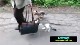 Кот не любит гулять.