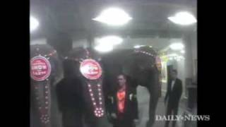 CAUGHT TORTURING ELEPHANTS - RINGLING BROTHERS AND BARNUM & BAILEY CIRCUS