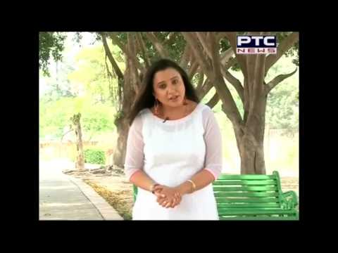 Termites attack on trees in City Beautiful Chandigarh | PTC News Report