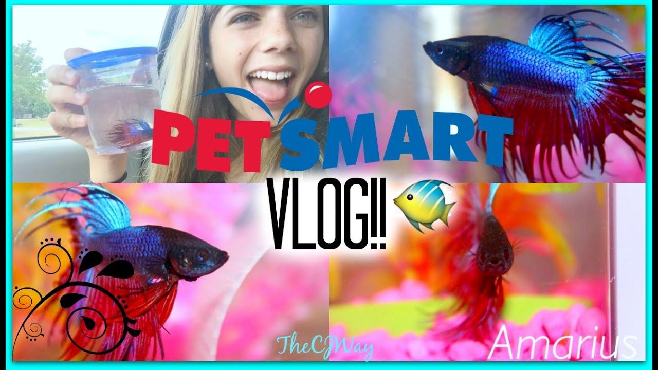 Petsmart vlog getting my new betta fish youtube for Petsmart betta fish