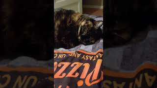 My cat snoring and sleeping