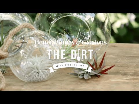 How To Grow and Care For Airplants   The Dirt   Better Homes & Gardens