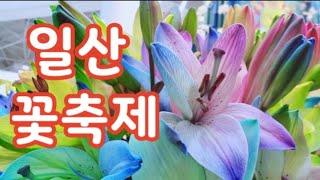 일산 꽃박람회, 5월 축제하는곳, 고양 꽃박람회, 고양국제꽃박람회, 2019고양국제꽃박람회, 일산 호수공원, 다육이, flower Festival, Ilsan lake park